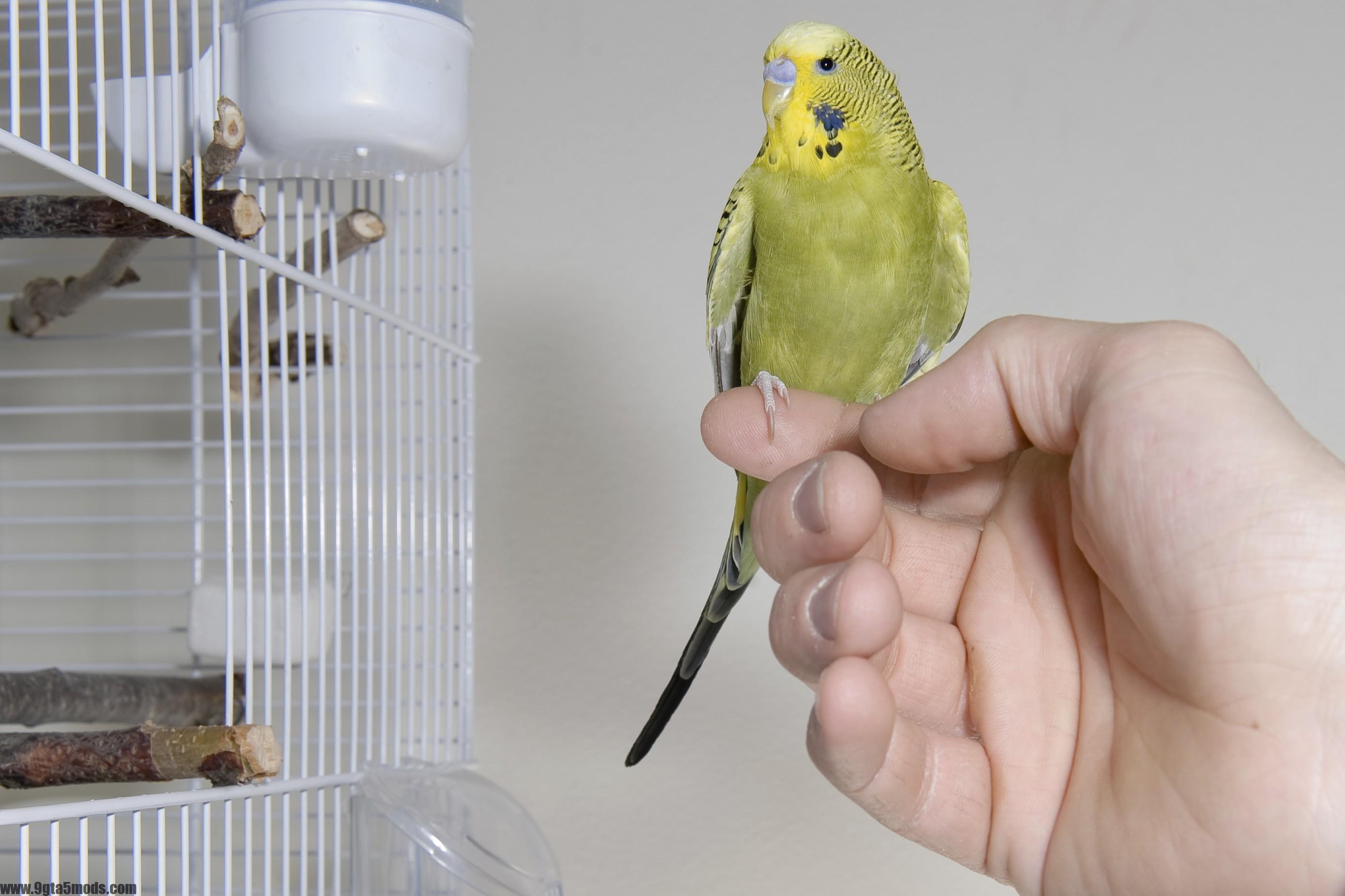 Why Does My Bird Bite? - 9gta5mods.com - photo#48